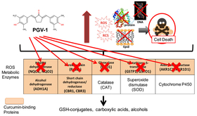 PGV-1 inhibits metabolic enzymes to increase ROS and kill cancer cells.
